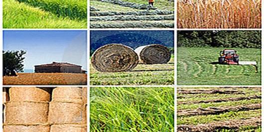 افتتاح 104 پروژه بخش کشاورزی سمنان/ نظر استاندار سمنان درباره شهیدان رجایی و باهنر