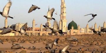 «غریبانه از بقیع تا طوس» نماهنگی برای غربت ائمه بقیع  و امام رضا(ع)+فیلم