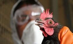 ابلاغ دستورالعمل مقابله با آنفلونزای فوق حاد پرندگان/ آمادگی مدیریت بحران در آستانه ماه محرم