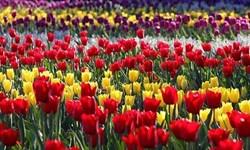 تولید سالیانه ۱،۵ میلیون گلدان گل در مرکز تولید گل و گیاهان زینتی شهر