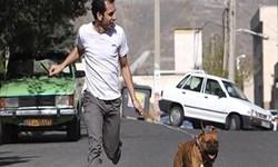 دادستان سابق شاهینشهر: با سگگردانی برخورد کردیم