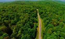 پوشش گیاهی جنگلهای مازندران از وضعیت مناسبی برخوردار است