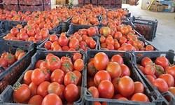 پیشبینی تولید ده تن گوجه فرنگی در گلخانههای شهرستان نیر