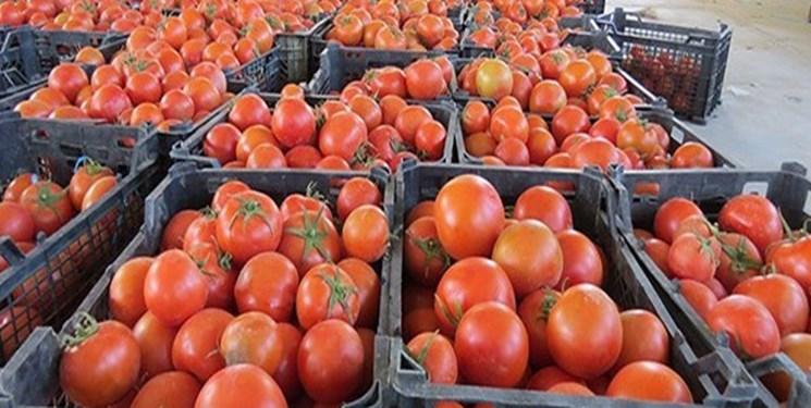 ماجرای برگشت خوردن گوجه فرنگی صادراتی از عراق