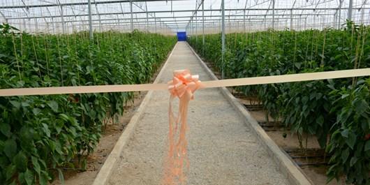 ایجاد گلخانهای به وسعت 500 متر برای اولین بار در اردستان