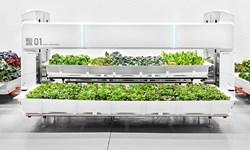 این ربات سبزیجات میکارد+تصویر