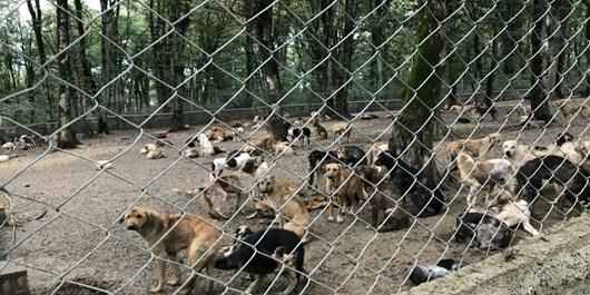 تعداد سگهای ولگرد کاهش یافته است/لزوم هماهنگی با شهرستان اردکان و اشکذر