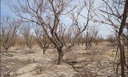 کاهش 40 درصد بارش نسبت به سال گذشته/ بام ایران در صدر جدول خشکسالی قرار گرفت