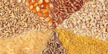 آسیب پذیری بالای کشور در تامین نهادههای کشاورزی/ ضریب خودکفایی کالاهای اساسی+جدول