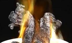مار سیاه را در خانه خود بسازید!+ فیلم