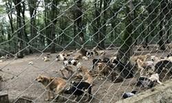 فارس من| جمعآوری سگهای بلاصاحب توسط شهرداری و انجمنهای مردمی در صدرا