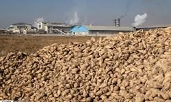 خرید تضمینی چغندرقند در آذربایجانغربی/اصلاح قیمت چغندر قند در سال جدید