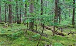 کاهش 37 درصدی آتشسوزی جنگلها و مراتع