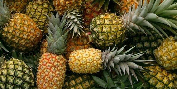 رسوب 300 تن محصول آناناس در گمرک/تصمیمات یک شبه به وارد کننده آسیب میزند