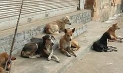فارس من| حمایت از سگهای بیصاحب در چهارچوب قانون، بهداشت و شرع