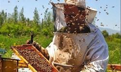 تولید 3 هزار تن عسل از کندوهای شهرستان مراغه/ اشتغال ۱۰۰۰ نفر در زنبورداری