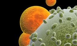 دستکاری سلول های ایمنی مقابله با سرطان را ساده تر می کند