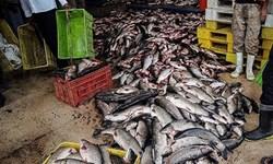 کشف 5 تن ماهی قاچاق در دشتیاری