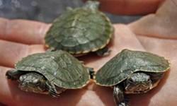 فارس من| مرگ لاکپشتها معاون سازمان محیط زیست را به سواحل دَرک کشاند