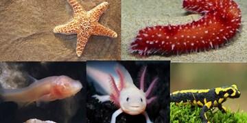 بازسازی شگفتانگیز اندامها در برخی حیوانات