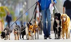 فارس من| خلأ قانونی برای برخورد با سگگردانی در معابر/ شورای تامین ورود کند
