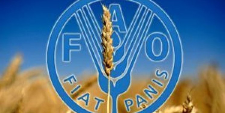 فائو  مدیرکل جدید انتخاب میکند/۸۲۱ میلیون نفر در جهان دچار سوء تغذیه هستند
