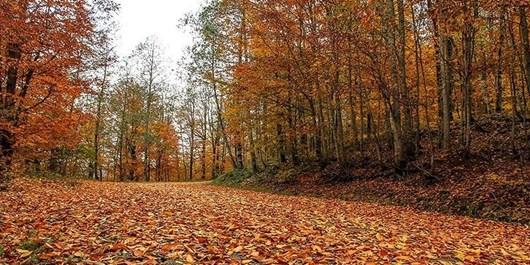 خودنمایی برگهای خزان پاییزی در کوچههای گرگان/ رفتگران و پارکبانان، کوچههای شهر را جارو نمیکنند