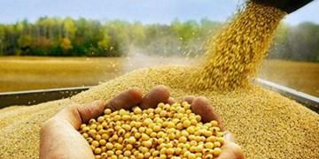 وعدههای بیفرجام مسئولان برای تأمین خوراک دام/ سویا کیلویی 13 تومان هم پیدا نمیشود