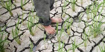 خشکسالی و بحران پیش روی کشاورزان لرستانی/ خسارت کشاورزان چگونه جبران میشود؟