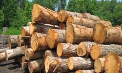 قاچاق چوب، جنگلهای طارم را تهدید میکند