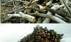 استعلام از کامیونهای حامل درخت از منابع طبیعی