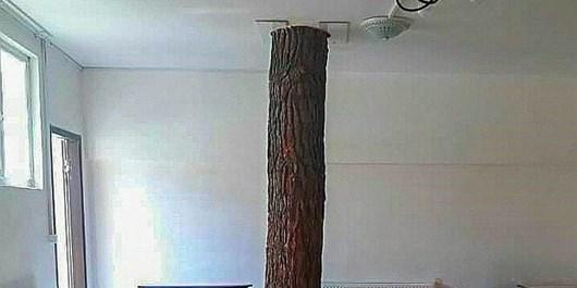 حفظ یک درخت وسط کلاس خبر خوش این روزها در میان انبوهی خبر بد+ تصاویر