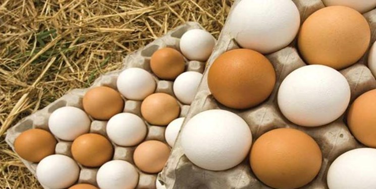 فارس من| تولیدکننده: دلالان مانع فروش کیلویی تخممرغ میشوند