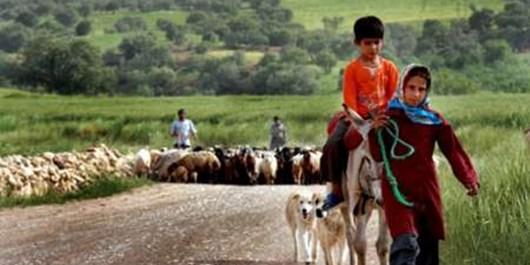 عشایر آذربایجانشرقی  سالانه ۱۵۰ هزار تن محصولات دامی تولید می کنند