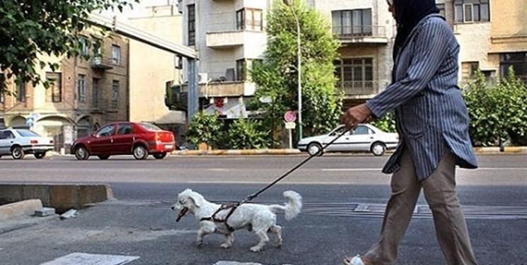 فارس من| عزم دادستان برای برخورد با سگگردانی در معابرعمومی
