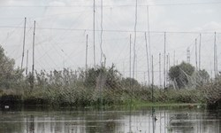 جمعآوری 4 هزار و 672 رشته دام هوایی از تالابهای مازندران