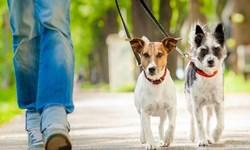 با فرزندی که سگ خانگی میخواهد چه باید کرد؟