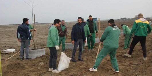 غرس 40 هزار نهال در شهرستان نور