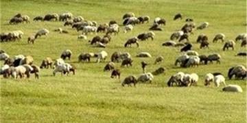 2.7 میلیون هکتار مرتع در آذربایجان شرقی وجود دارد/ هشدار درباره فرسایش خاک در حوضه دریاچه ارومیه
