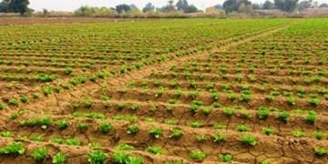 زهکشی  34 هزار هکتار از اراضی کشاورزی گلستان