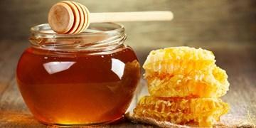 برداشت 400 تن عسل بهاره در فسا