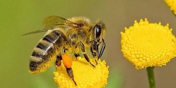 زنبورها می توانند نمادها و اعداد را به هم مرتبط کنند