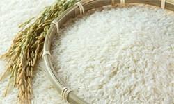 درخواست تخصیص ارز برای500 هزار تن برنج و ارداتی+ نامه