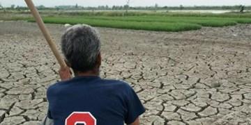 خودکفایی برنج در انتظار کلید تدبیر/ مجمع نمایندگان گلستان چارهجویی کنند