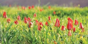 تجربه چهار فصل در زیرکوه/ از خودنمایی لالههای سرخ تا معجزه خدا در دل کویر