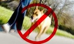 برخورد قاطع با سگگردانی اولویت اجرایی پلیس در یزد