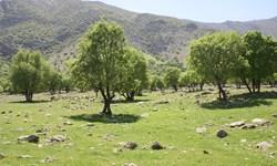 ویلا سازی تا بناگوش شاهدژ در مازندران+ فیلم