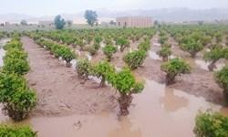 پرداخت تسهیلات به کشاورزان خسارتدیده از سیل/ بارگذاری بیش از 8000 پرونده در سامانه سجاد