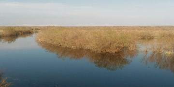 آبگیری دریاچه نمک پس از ۸ سال خشکسالی/ تالاب «بندعلیخان» پر شد