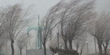 ریزش دیوار و سقوط درخت بر اثر سرعت 50 کیلومتری باد در مشهد